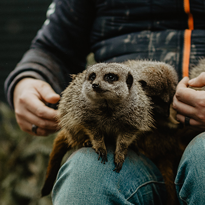 animal zoo farm pet photography 02